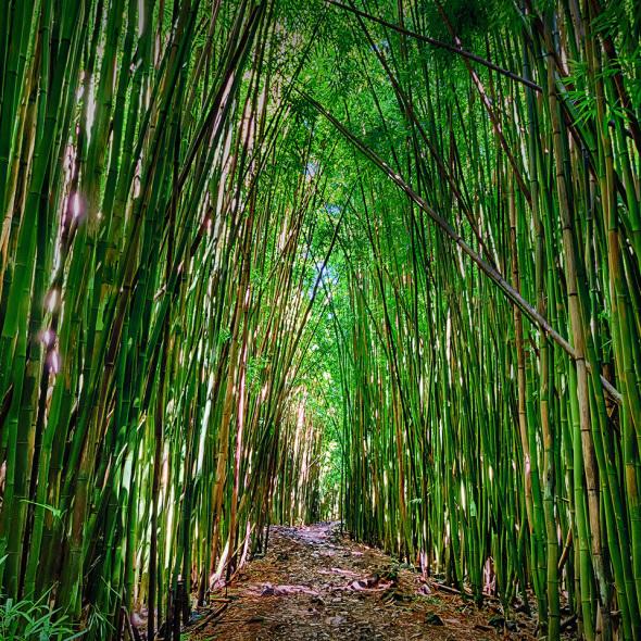 Bamboo Zen - HDR