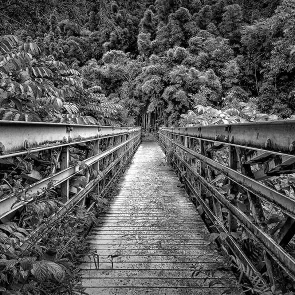 Bridge to Bamboo