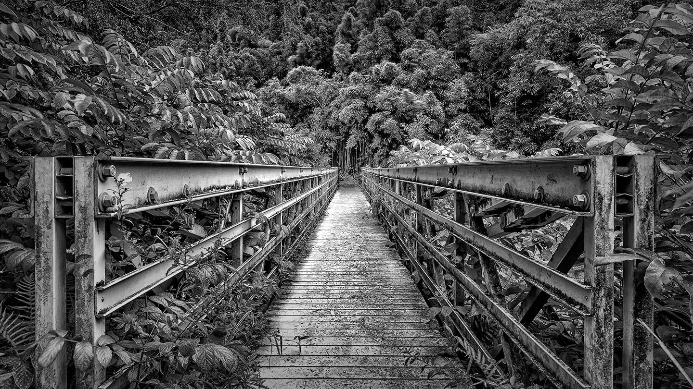 Bridge to Bamboo