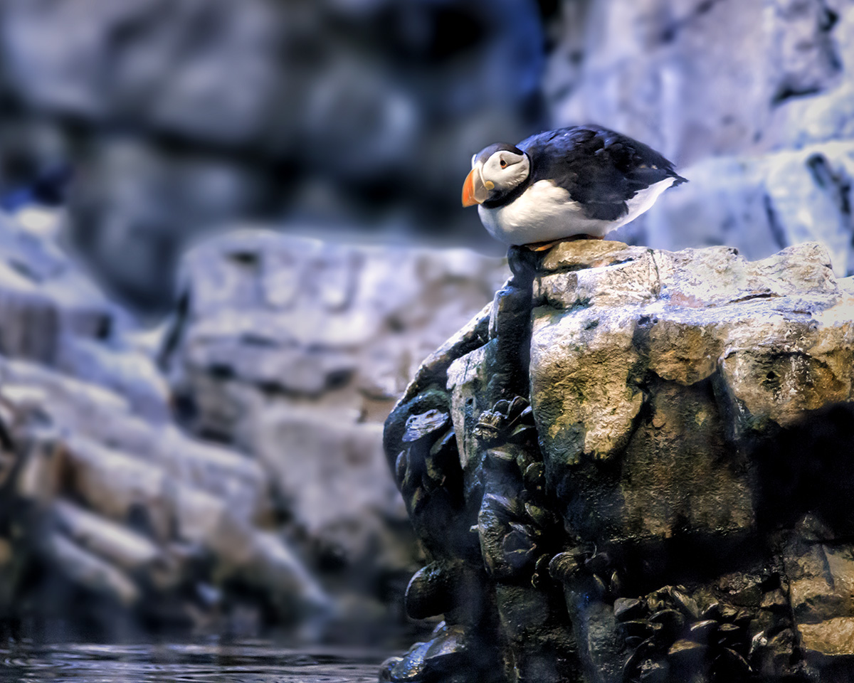 Penguin Squatter